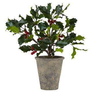 Potted Holly Plant 35-inch Pot