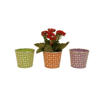 Wald Imports Assorted 5-inch Pastel/ Dots Distressed Containers (Set of 6)