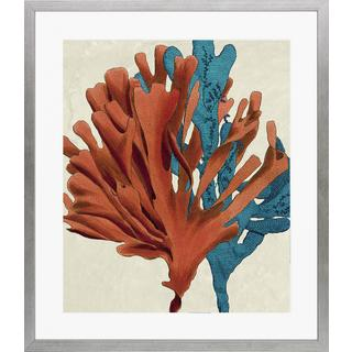 Multi-colored Seaweed' Framed Art Print