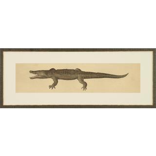 Reptilia Illustrations Alligator Framed Art Print