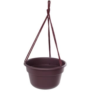Bloem Exotica Dura Cotta Hanging Basket