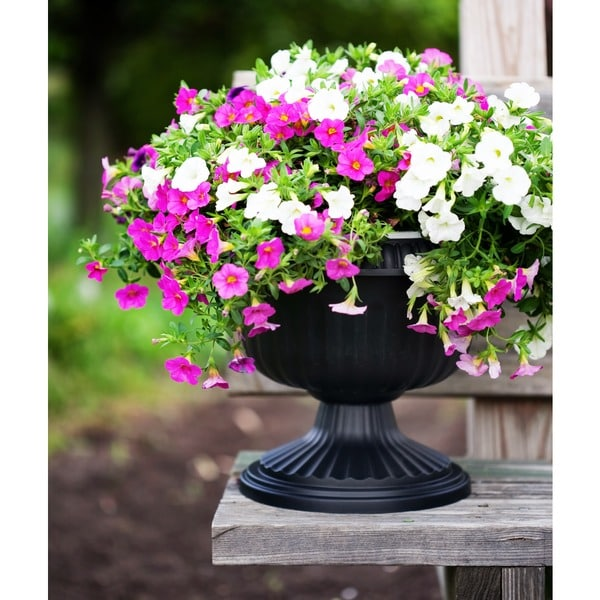 Shop Bloem Black Grecian Urn Free Shipping On Orders Over 45