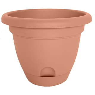 Bloem Lucca Terra Cotta Planter (Pack of 6)