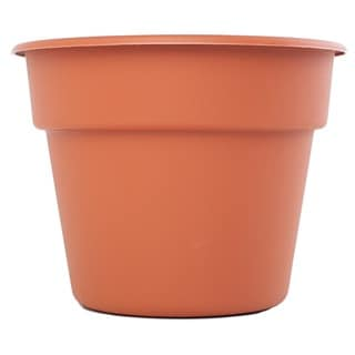 Bloem Dura Cotta Terra Cotta Planter (Pack of 24)