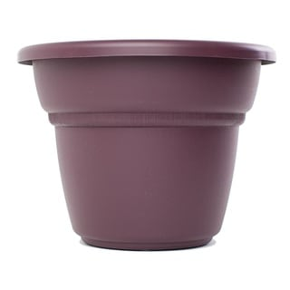 Bloem Milano Exotica Planter (Pack of 24)