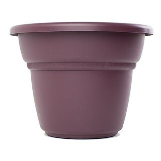 Bloem Milano Exotica Planter (Pack of 12)