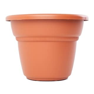 Bloem Milano Terra Cotta Planter (Pack of 6)