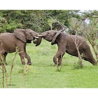 Stewart Parr 'Young Tanzania Elephants Playing' Unframed Photo Print