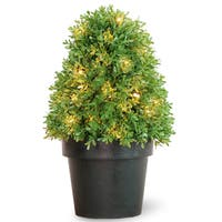 18-inch Boxwood Tree with Dark Green Growers Pot with 35 Clear Lights