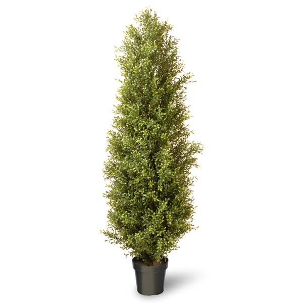 72-inch Argentia Plant with Green Pot