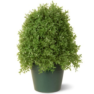 15-inch Boxwood Tree with Green Pot
