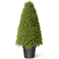 36-inch Boxwood Tree with Green Pot
