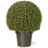 22-inch Mini Boxwood Ball with Green Pot