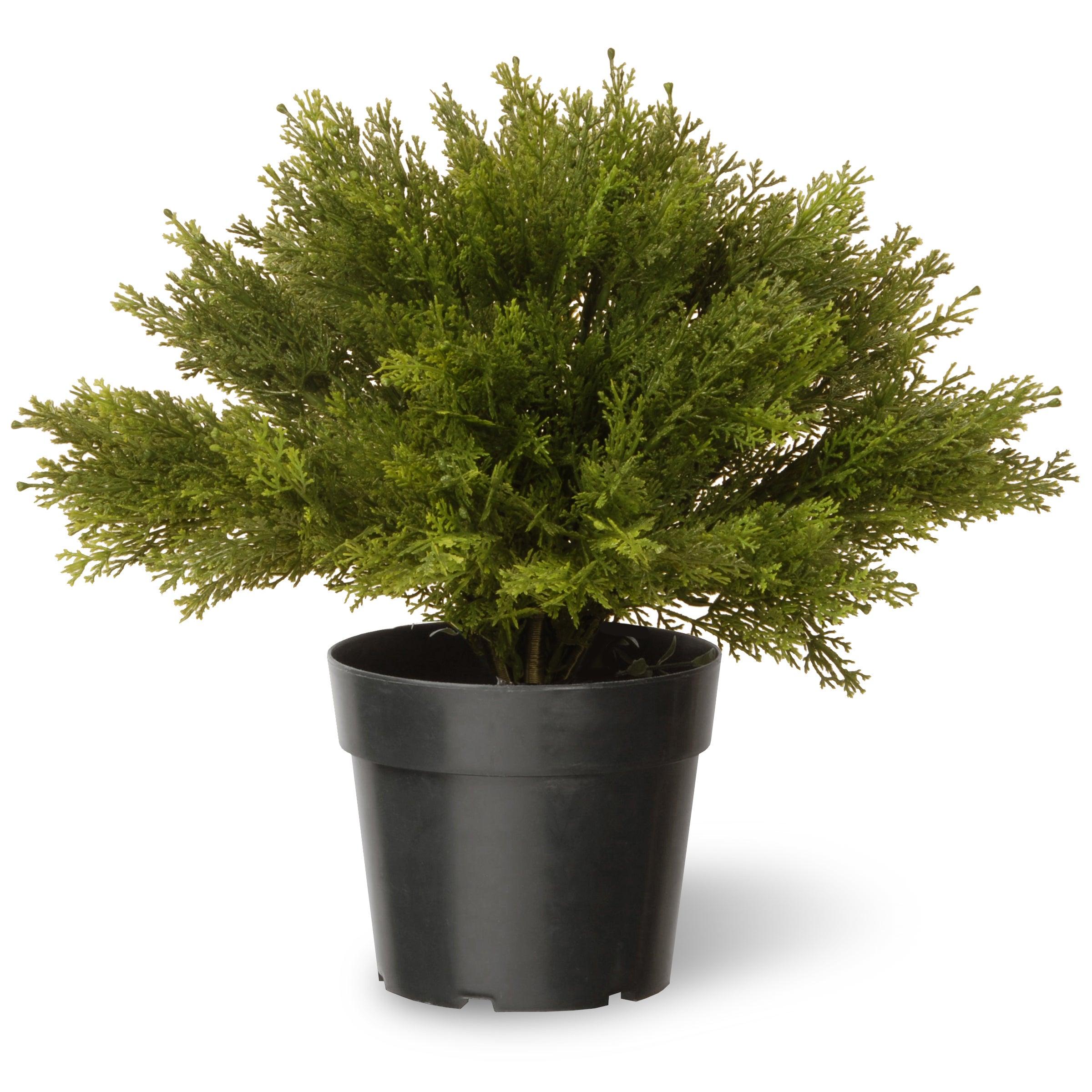 National Tree 15-inch Globe Juniper with green Pot (Green)