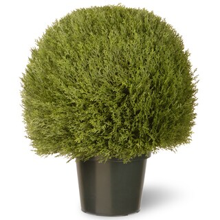 24-inch Cedar Pine Topiary in Green Pot