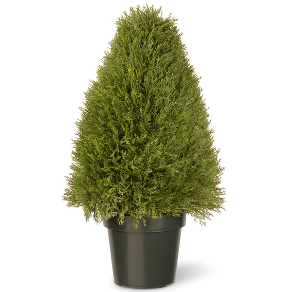 "30-inch Unpright Juniper with Green Pot - 30"". Opens flyout."