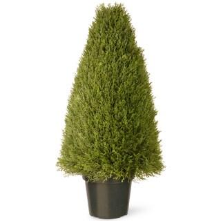 "36-inch Unpright Juniper with Green Pot - 36"""
