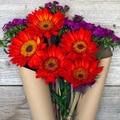 The Bouqs California Collection 'Cherry Bombs' Single Sunflower Bouquet