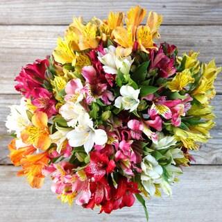 The Bouqs California Collection 'Prism' Single Alstroemeria Bouquet
