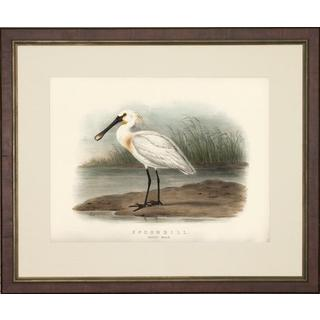 Spoonbill Bird Framed Art Print