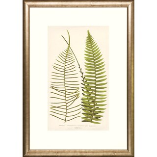 Transitional Ferns Framed Art Print