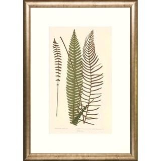 Three Transitional Ferns Framed Art Print