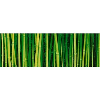 Haim Laferie 'Bamboo' Plexi Photography