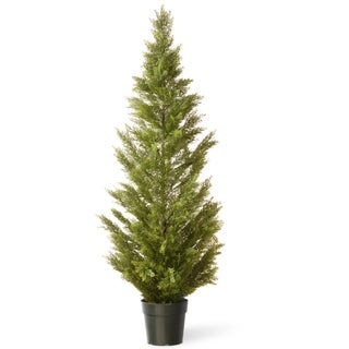 60-inch Arborvitae with Green Pot