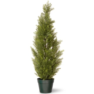 36-inch Arborvitae with Green Pot