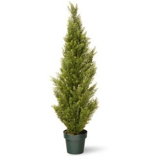 48-inch Arborvitae with Green Pot