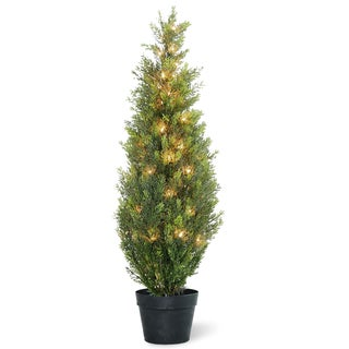 36-inch Arborvitae in Green Grower's Pot with 50 Clear Lights