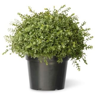 15-inch Mini Tea Leaf 1-ball with Growers Pot