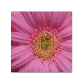 Kurt Shaffer 'Pink' Canvas Art