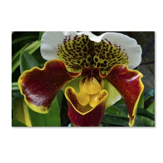 Kurt Shaffer 'Alien Orchid' Canvas Art