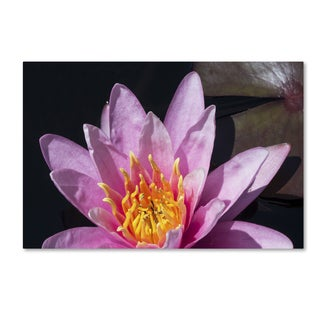 Kurt Shaffer 'Pink Lotus' Canvas Art