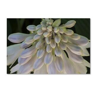 Kurt Shaffer 'Hosta Flower Abstract' Canvas Art