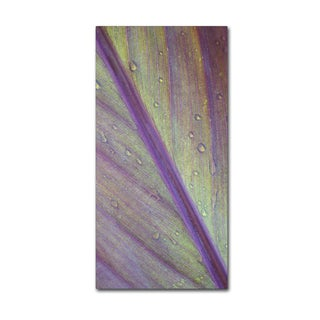 Kurt Shaffer 'Cross Study of a Wet Leaf' Canvas Art