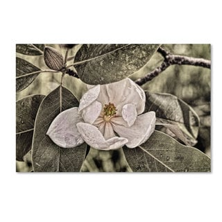 Lois Bryan 'White Magnolia' Canvas Art