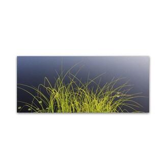 Kurt Shaffer 'Pond Grass Abstract' Canvas Art