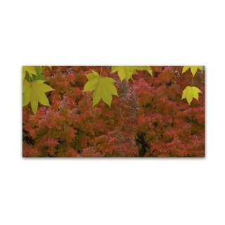 Kurt Shaffer 'The Green and Red of Autumn' Canvas Art
