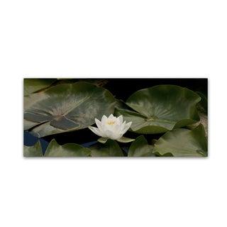 Kurt Shaffer 'One White Water Lily' Canvas Art