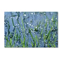 Beata Czyzowska Young 'After the Rain' Canvas Art