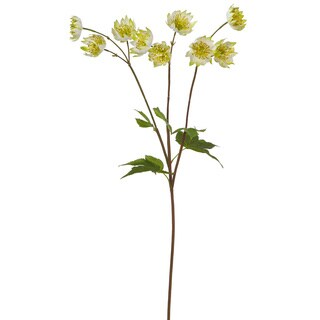 24-inch Astrantia Stem (Pack of 12)