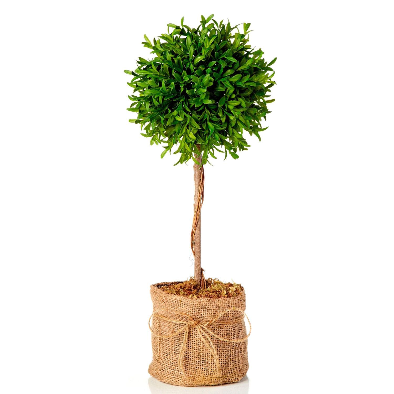 20 Inch Myrtle Topiary Ball In Burlap Set Of 2 Overstock 9809463