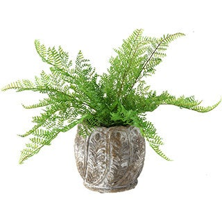 Lace Fern in Round Cement Planter