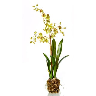 21-inch Odontoglossum Orchid Drop In (Pack of 2)