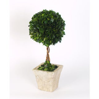 16-inch Large Boxwood Topiary Preserved (Packed 1 Each)