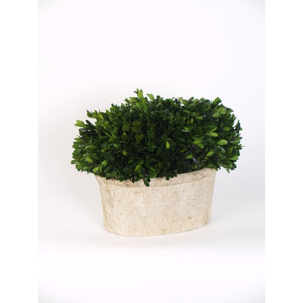 Shop 12 5 Inch Medium Oval Boxwood Preserved Packed 1 Each Free Shipping Today Overstock