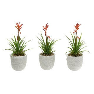 D and W Silks Blooming Succulent in Ceramic Planter (Set of 3)