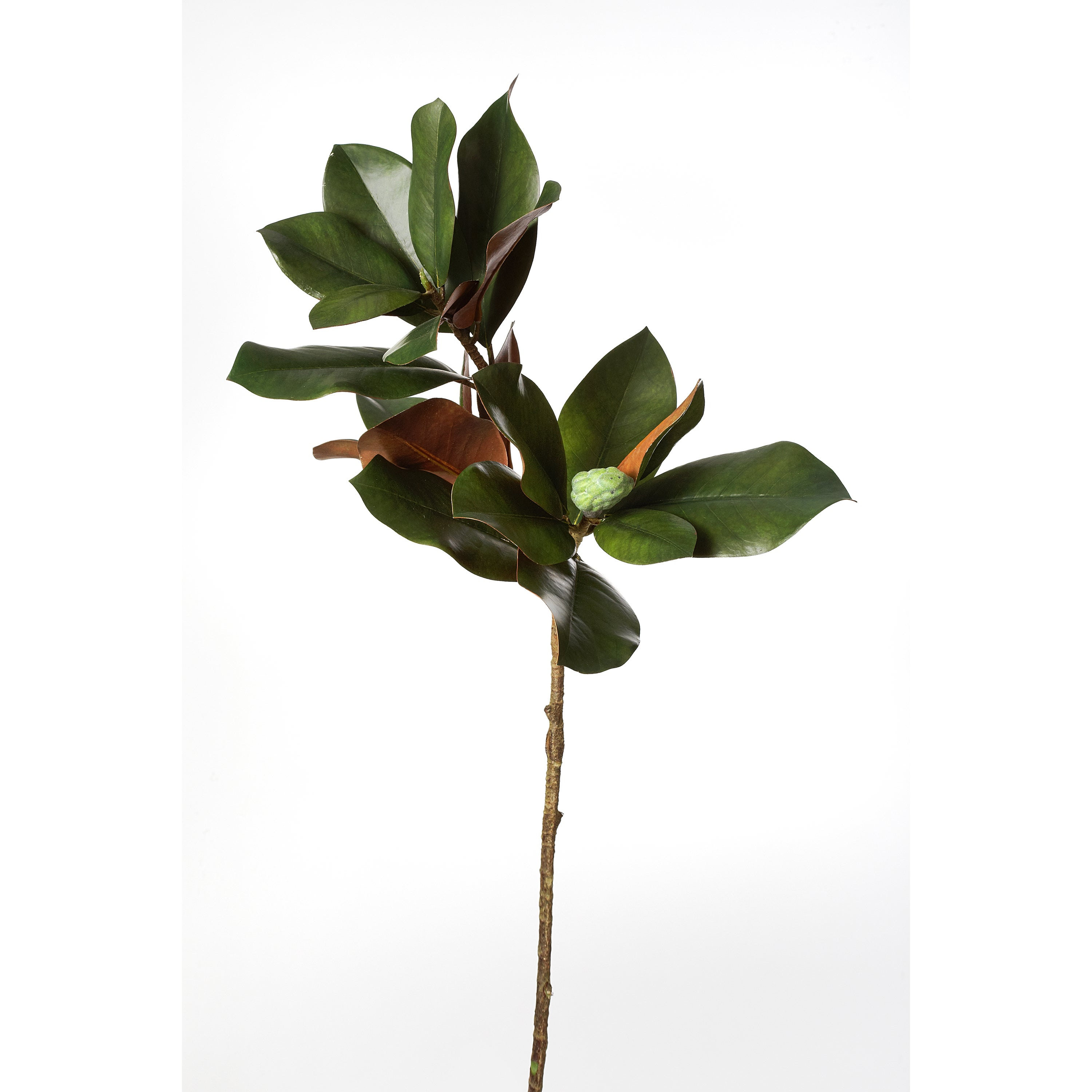 32 Inch Magnolia Branch Pack Of 6 Overstock 9821684